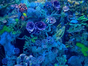 New Reef Coral