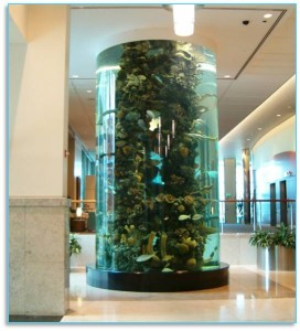 cylindrical custom saltwater aquarium